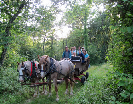 Summer picture of horse drawn wagon rides
